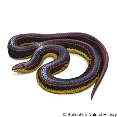 rainbow snake