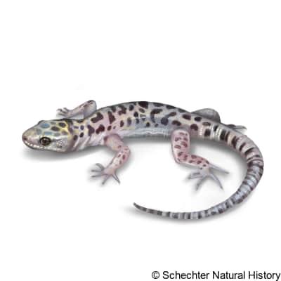 sandstone night lizard