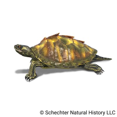 escambia map turtle